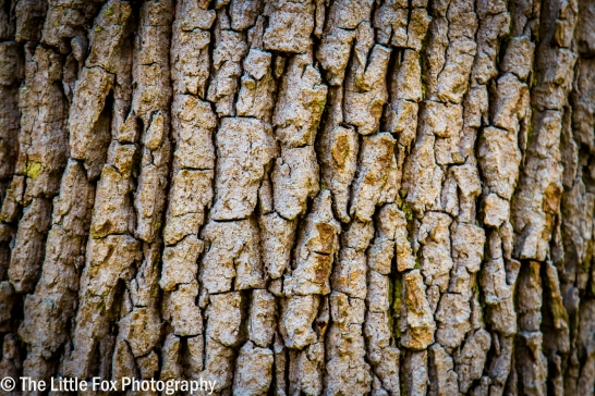 Bark in the New Forest