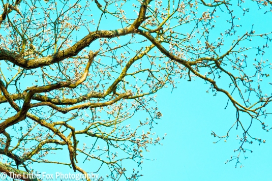 Blossom on Turquoise Sky