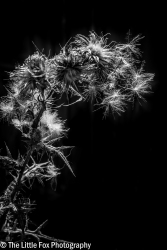 Sunlit Seeds