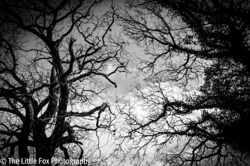 Grey Sky Thinking