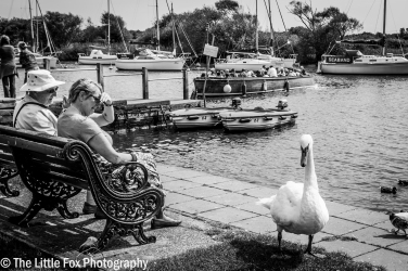 Swanning Around at the Quay